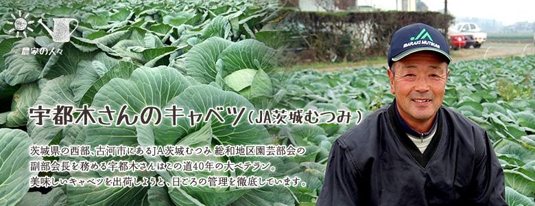 宇津木さんのキャベツ