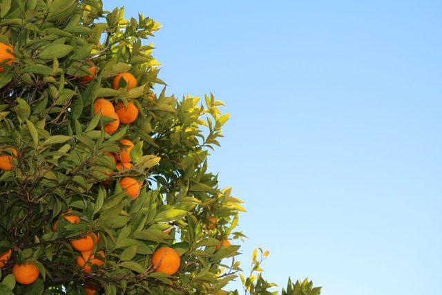 mandarins-569370_960_720