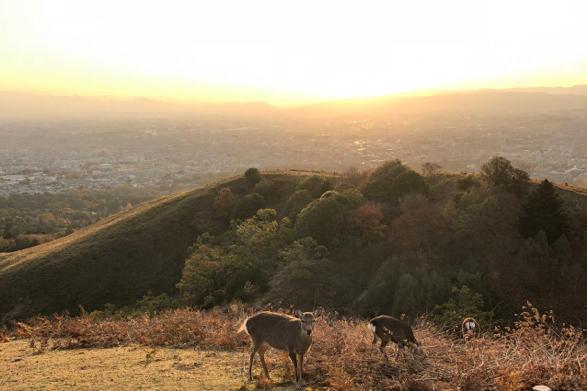 若草山山頂からの眺望