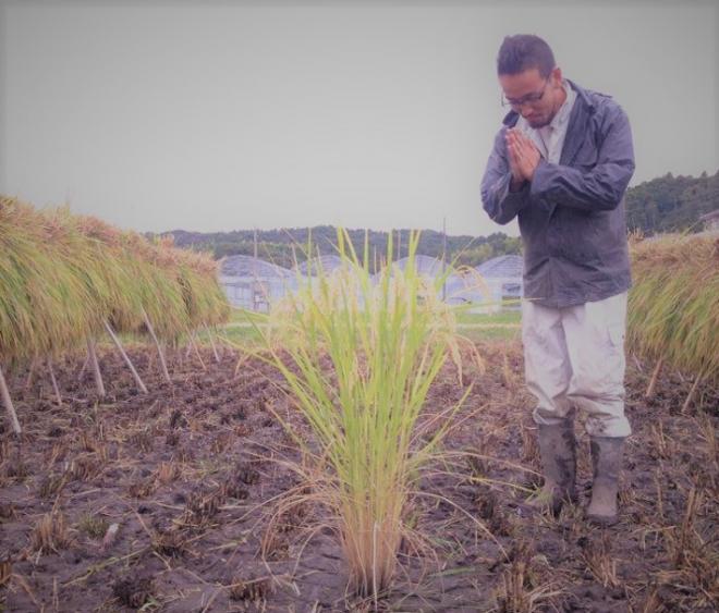 農業で米の栽培にもチャレンジしている東さん
