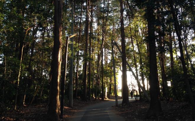 木漏れ日が差し込む林
