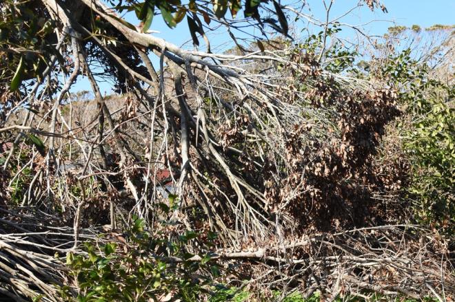 自然公園内の木も多くが倒れてしまいました