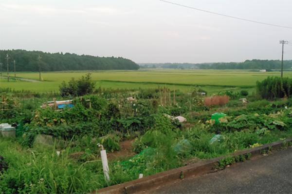 筆者の家庭菜園