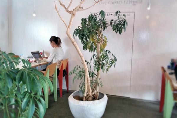 A+LIVE_植木鉢