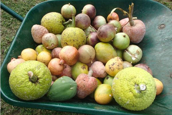 いっぱいの果物