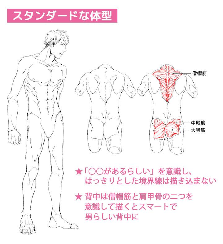 男性キャラクターの人体筋肉の描き方講座 イラストマンガ描き方ナビ