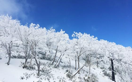 今年の冬は期待大!?
