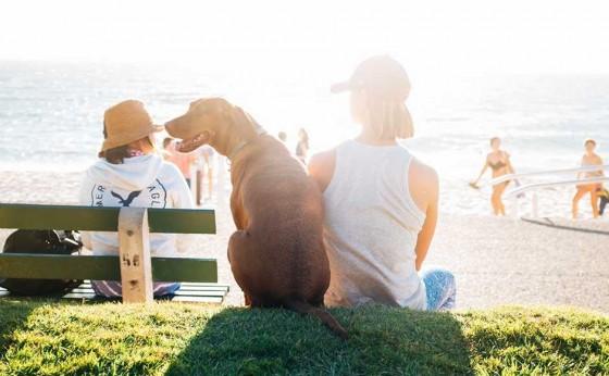 犬と人とのライフスタイルショップ「ドギー ブロ」がオープン