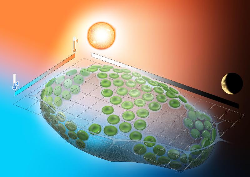 葉緑体の移動と光の強度の関係