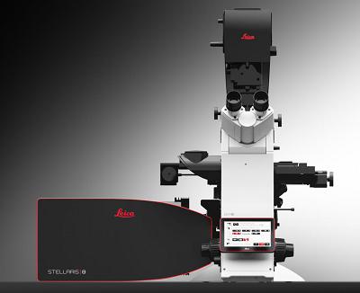 共焦点レーザー顕微鏡 STELLARIS