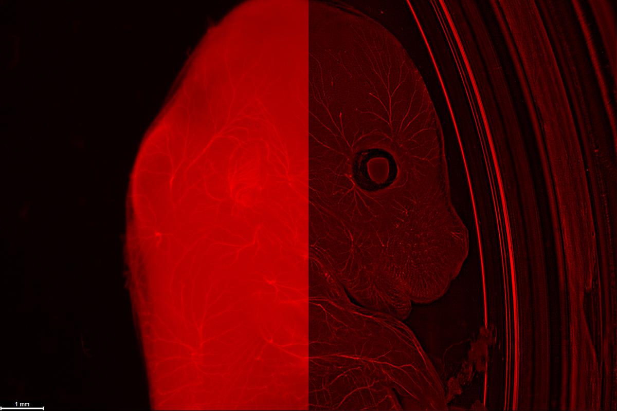 (申込受付終了)実体顕微鏡のための超高精細蛍光イメージング 実機ワークショップ