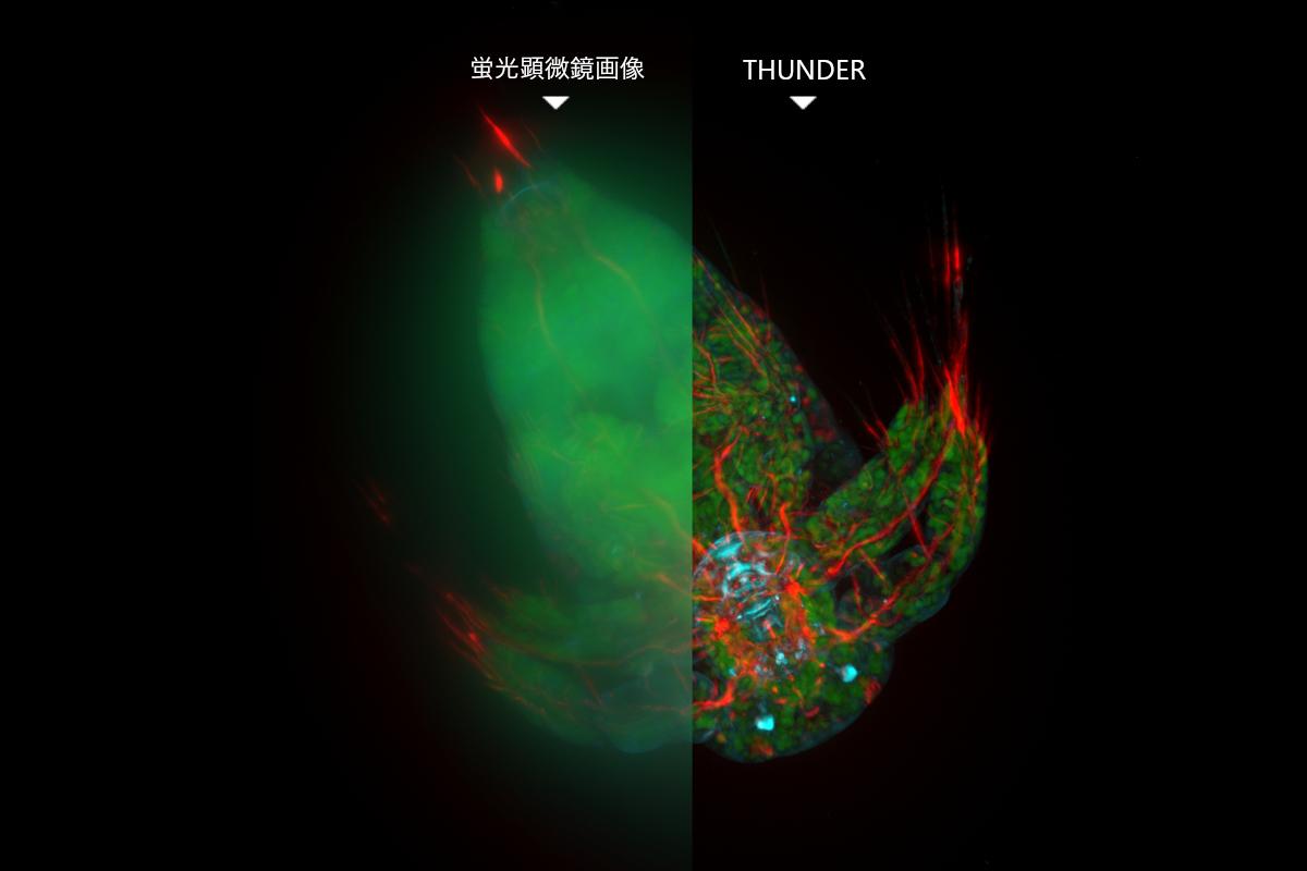 Leica THUNDER テクニカルノートダウンロード/培養細胞から組織標本、モデル生物まで―蛍光ボケを徹底排除してハイスループットに超高精細蛍光イメージングするなら