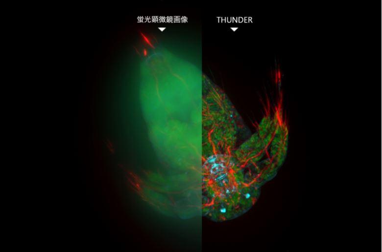 11月27日開催 THUNDER Imager オンラインサロン -最新のオプトデジタル技術で、3Dバイオロジーをリアルタイムに解き明かす-