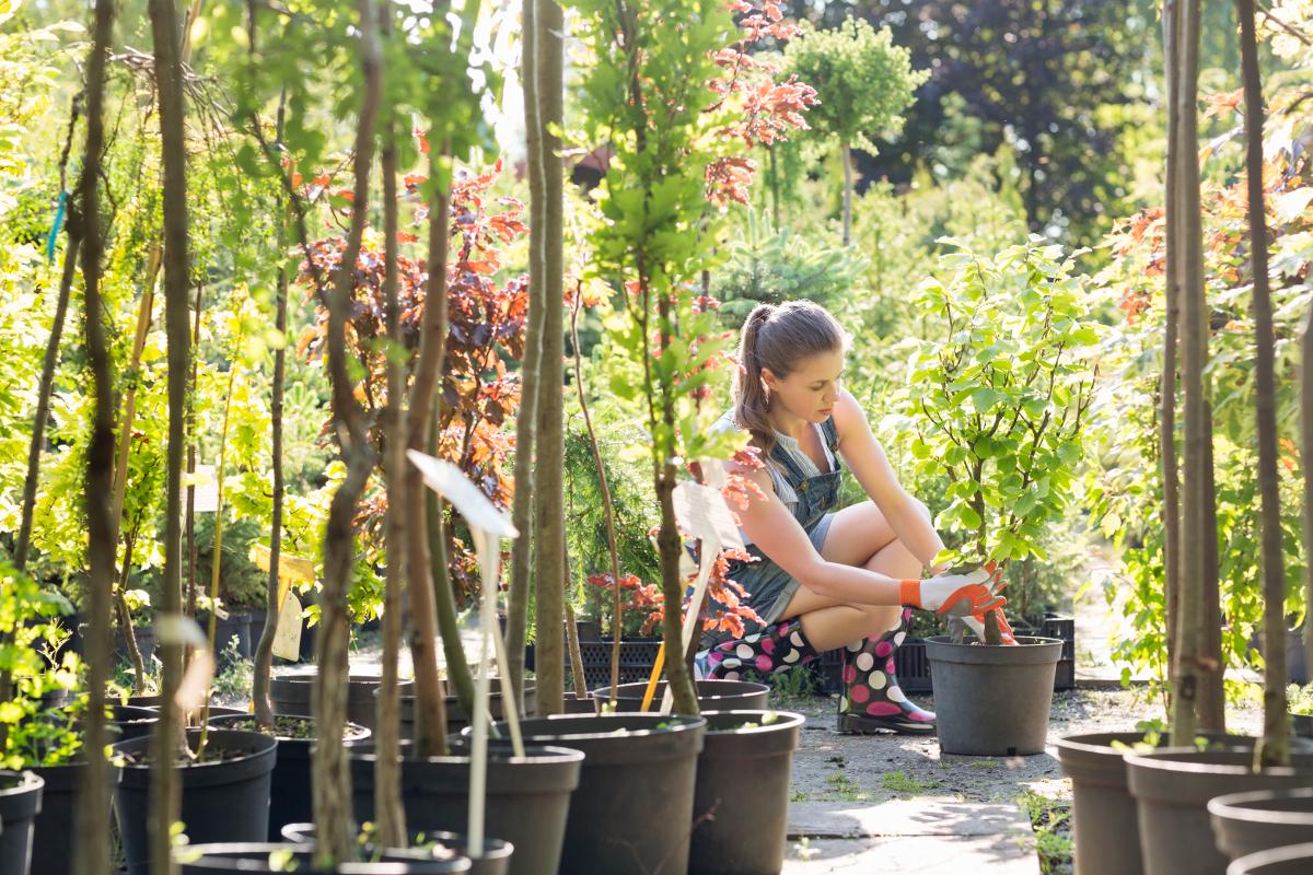 植物の傷修復メカニズム―「接ぎ木」の研究から解った植物ホルモンの驚きの力