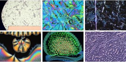 (申込受付終了)<無料セミナー>光学顕微鏡基礎知識 ~基本光学系と観察手法による見え方の違い(2018年3月26日 10:30~)