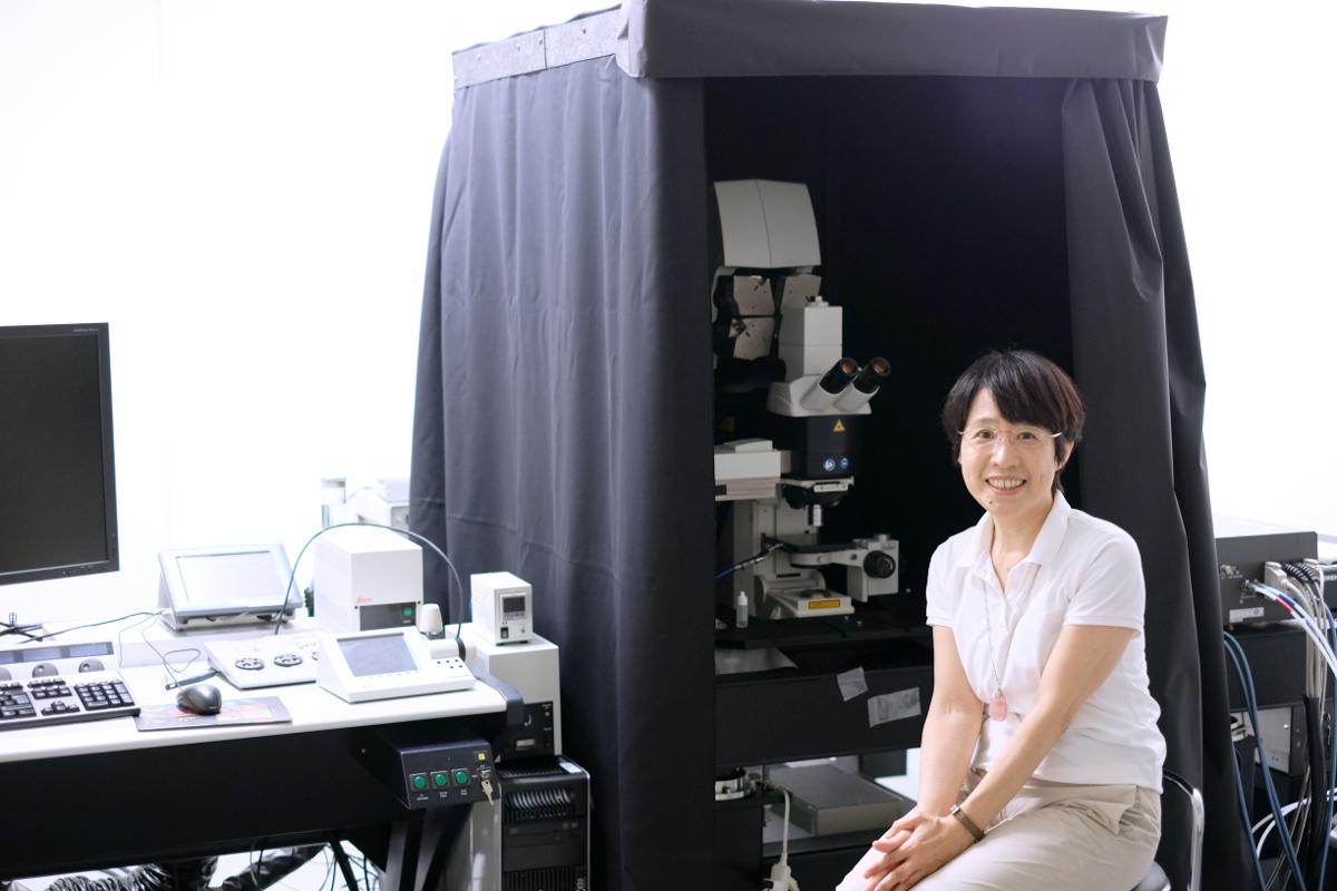 マルチフォトン顕微鏡観察事例/蛍光イメージングを使って発生・再生の時間的空間的制御機構を解き明かす