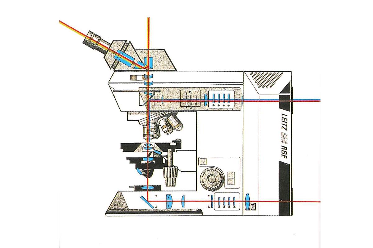 顕微鏡基礎知識/知ってるようで知らなかった―光学顕微鏡ってなんですか?