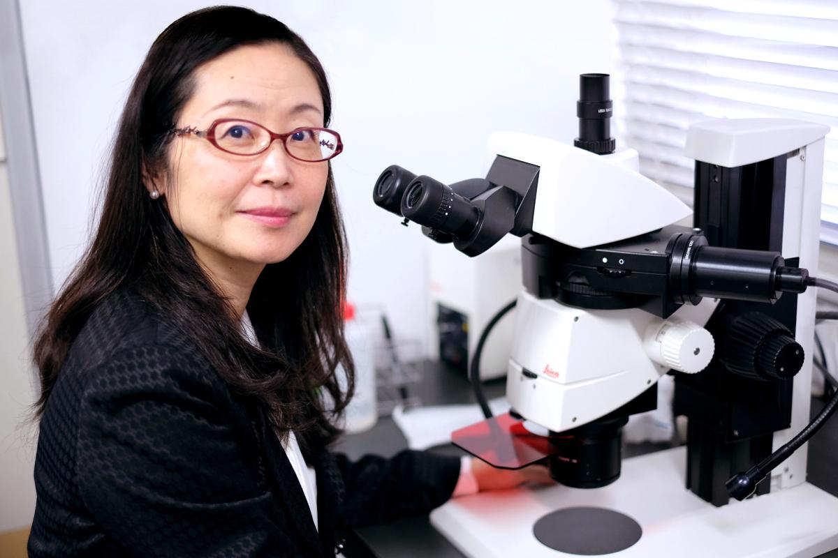 実体蛍光顕微鏡観察事例/親分遺伝子Pax6が脳の発生と発達に与える影響