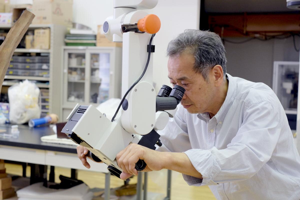 実体顕微鏡観察事例/科学的アプローチで文化財を救う文化財保存修復の最前線