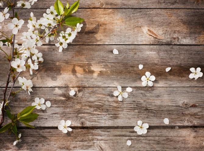 新生活 さくらの花びら