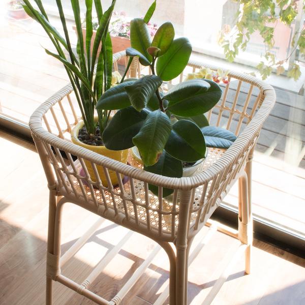植木を集めておけば日光浴させるのも簡単(スクエア)